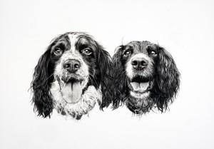 pencil drawing 'pet portrait' 'pet pencil drawing' 'pet drawing' 'portrait drawing' 'portrait artist' dogs