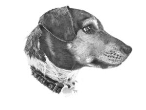 dog portrait drawing pencil art