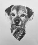 pencil portrait drawing dog terrier