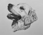 pet portrait dog drawing pencil sketch