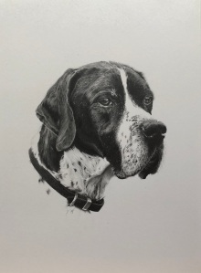 pencil drawing dog portrait