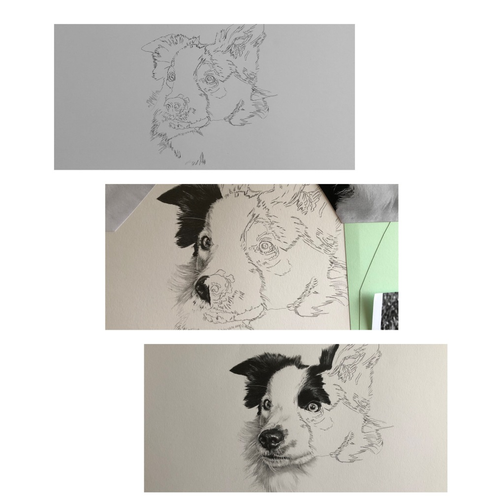 """""""work in progress photos of a pencil pet portrait drawing by the Drawn Studio"""""""